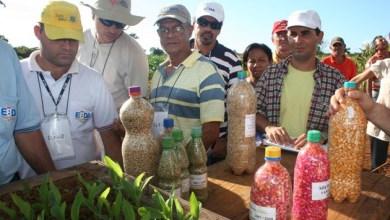 Photo of Programa beneficia agricultores familiares com sementes e mudas anualmente