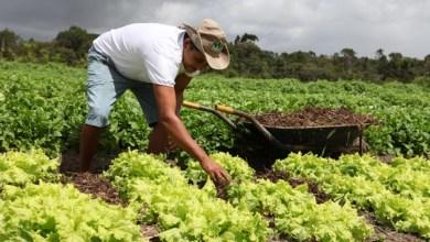 Photo of Agricultores familiares terão acesso mais rápido ao Agroamigo