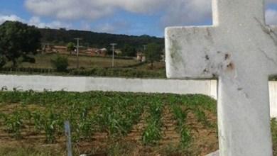 Photo of Morador planta milho e batata dentro de cemitério em zona rural de município baiano