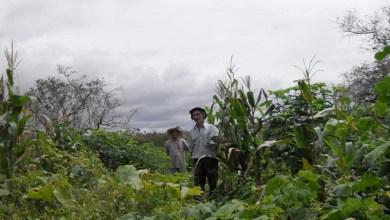Photo of Serviço de demarcação de lotes em assentamento precisa de autorização do Incra