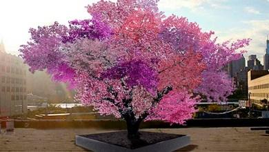 Photo of Árvore hibrida produz mais de 40 frutos diferentes; conheça aqui