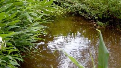 Photo of Chapada: Programa da EBDA prevê a proteção de nascentes de 23 rios