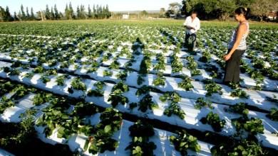 Photo of Chapada: Morro do Chapéu conta com unidade de observação para cultivo de frutas