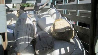Photo of Chapada: Polícia Civil incinera 1,6 tonelada de maconha em Jacobina