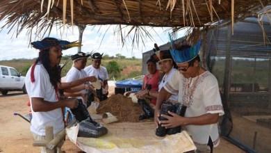 Photo of Chapada: Governo reintegra tribo indígena Payaya por meio da agricultura em Utinga