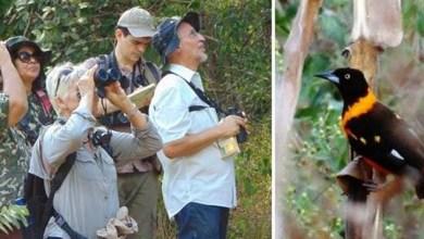 Photo of Clube de Observação de Aves da Bahia visita o Parque Nacional da Chapada Diamantina