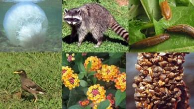 Photo of Marco da Biodiversidade aprovado no Senado traz avanços, avaliam entidades