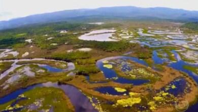 Photo of Chapada: Planta que deu origem ao papiro do Egito é abundante no Pantanal do Marimbus