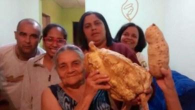Photo of Chapada: Batata doce com mais 3 quilos é colhida em sítio de Jacobina