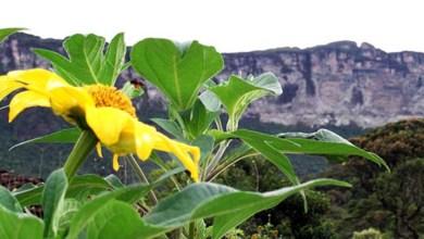 Photo of Bahia: Primeiro fim de semana do mês terá temperaturas elevadas e poucas chuvas