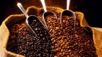 Photo of Cafés da Chapada Diamantina são destaques em maior concurso de qualidade no Brasil