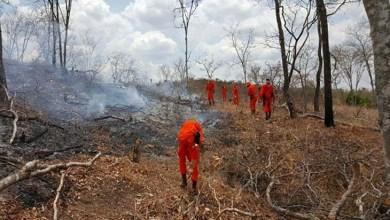 Photo of Ações do governo controlam incêndios florestais na Chapada Diamantina e no Oeste