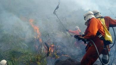 Photo of Chapada: Foco de incêndio florestal é debelado na região de Andaraí