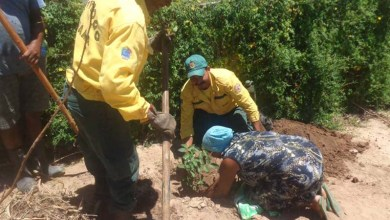 Photo of Chapada: Brigadas e Ibama realizam doação de mudas em Itaetê
