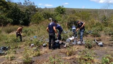 Photo of Operação prende 24 pessoas na Bahia e em Pernambuco por envolvimento em tráfico de drogas