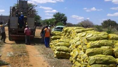 Photo of Programa da SDR garante alimentação do rebanho no período de seca na Bahia