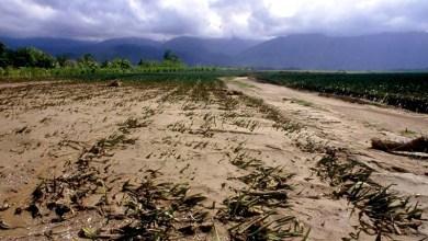 Photo of #Mundo: Nações Unidas alertam para pobreza gerada por alterações climáticas
