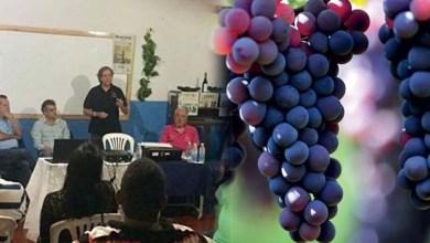 Photo of Chapada: Cooperativa de produtores de vinhos é criada em Morro do Chapéu