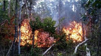 Fogo na região de Morro do Chapéu - FOTO Jaime 5