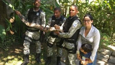 Photo of #Bahia: Cobra de 2,5 metros é resgatada em quintal de casa em Salvador