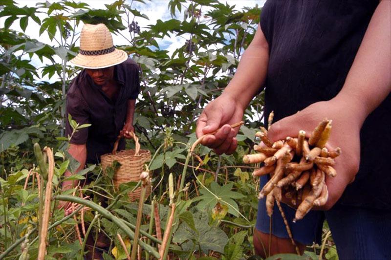 #Bahia: Inscrições para safra de inverno do Garantia-Safra 2017/2018 são prorrogadas