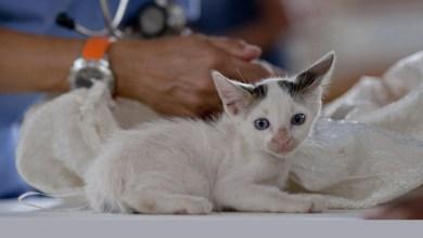Photo of Chapada: Grupo 'Bichos do Capão' realiza mutirão para castrar animais domésticos em maio