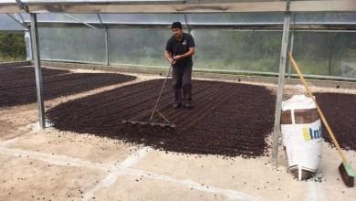 Photo of Chapada Diamantina é destaque na produção de café da agricultura familiar que conquistou o mundo