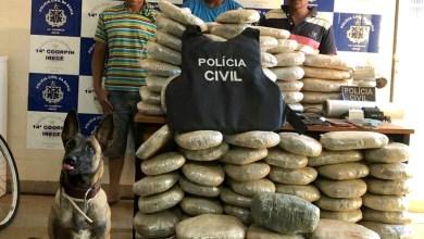 Photo of #Fotos: Cadela localiza 132 quilos de maconha enterrados em Irecê e polícia prende três