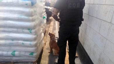 Photo of #Salvador: Cães ajudam a localizar cocaína avaliada em R$ 23 mi; maior apreensão na Bahia