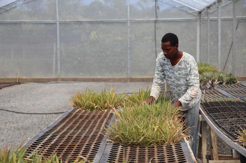 Agroindústria de fruticultura orgânica deve gerar 2 mil empregos na Chapada Diamantina