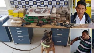 Photo of #Bahia: Cão da Cipe-Sudoeste localiza 80 kg de drogas e armas em ação integrada com a PRF