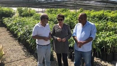 Photo of Chapada: Secretária estadual do Desenvolvimento Econômico visita projeto agroindustrial em Lençóis