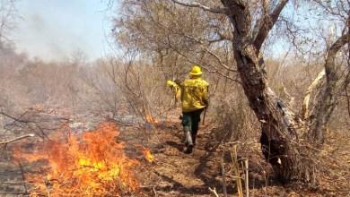 Photo of #Bahia: Incêndio em Parque Nacional Boqueirão consome área igual a três mil campos de futebol