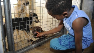 Photo of #Brasil: Resolução caracteriza crueldade, abuso e maus-tratos contra animais