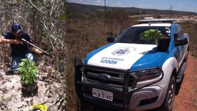 Photo of Chapada: Polícia Civil recebe denúncia e encontra pés de maconha no município de Barra da Estiva