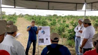 Photo of Chapada: Secretário de Agricultura de Itaberaba participa de evento da Embrapa