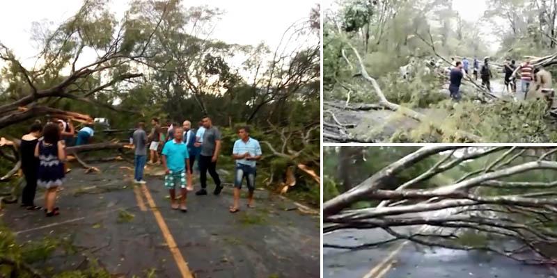 Chapada: Chuvas e ventos fortes derrubam 60 árvores em estrada na região de Andaraí