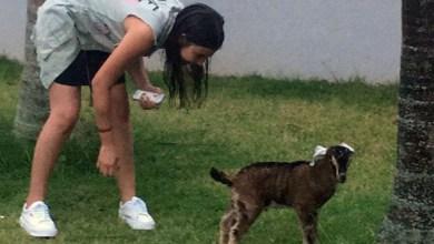 Photo of #Brasil: Menina pede unicórnio de Natal, mas se encanta com mini bode de presente
