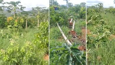 Photo of Chapada: Ituaçu sente benefícios e problemas após chuvas dos últimos dias; veja vídeos