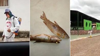 Photo of Chapada: Peixes aparecem mortos em rio de Ituaçu e secretaria colhe amostras para análise