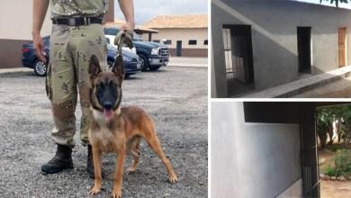 Photo of Chapada: Policiais da Cipe passam a contar com apoio de cachorro a partir de março para busca de drogas