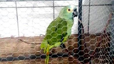 Photo of 'Mamãe, polícia!'; diz papagaio antes de ser apreendido por policiais em ponto de tráfico