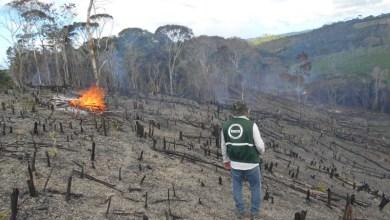 Photo of #Bahia: Operação do Inema identifica e interdita áreas de desmatamento no Litoral Norte