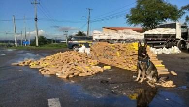 Photo of #Fotos: Caminhoneiro é detido na Bahia com mais de três toneladas de maconha escondidas em carga de farinha