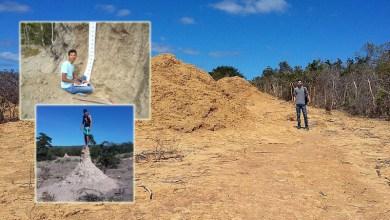Photo of Chapada: Biólogo morador de Seabra é referência mundial em relevos formados por cupins