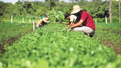 Photo of Chapada: Lençóis dá apoio para que agroecologia seja destaque em programa de desenvolvimento