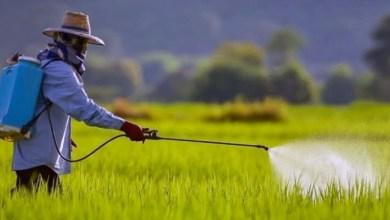 Photo of #Polêmica: Governo Bolsonaro libera mais 51 agrotóxicos; já são 262 somente este ano