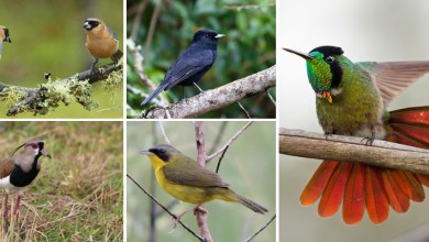 Photo of Diversidade de aves encontradas no Parque Nacional da Chapada Diamantina encanta visitantes