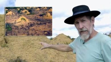 Photo of Colônia de cupins na Chapada Diamantina chega a 3,8 mil anos e tem o tamanho da Grã-Bretanha