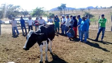 Photo of Agricultores familiares de municípios da Chapada Diamantina recebem capacitação sobre atividade leiteira